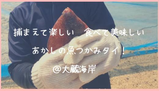 「あかしの魚つかみタイ」@大蔵海岸に行ってきました|魚との触れ合いも、家で食べる美味しさも子供達が大喜びでした!